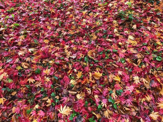 Autumn leaves in many colours