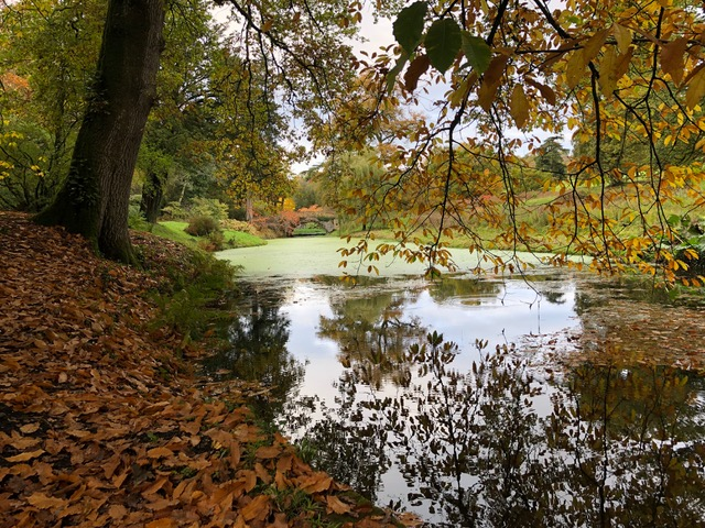 Autumn trees and leaves and a lake